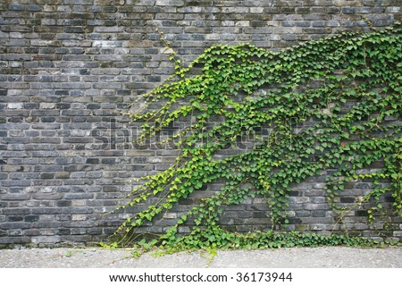 green vines on brick wall