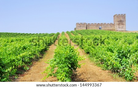 Green vineyard and Valongo castle