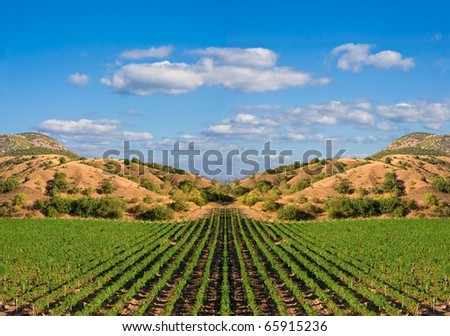green vineyard in a mountain valley