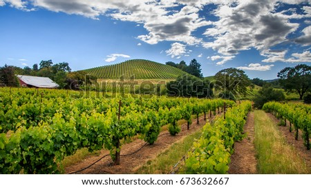 Green vineyard with white wispy clouds