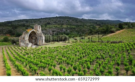 Green vineyards in french countryside of Languedoc Roussillon with the ruins of an old abbey at the background