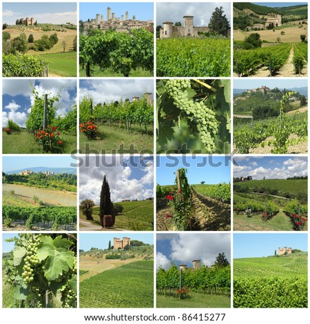 green vineyards in tuscan countryside, Italy,Europe