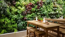 Green wall and wood table in restaurant