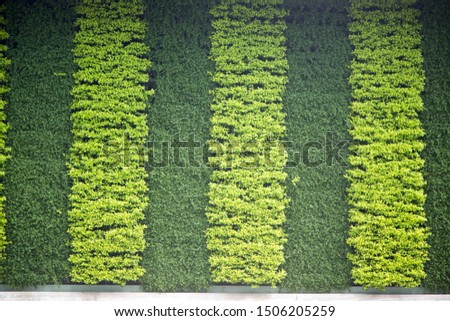 green wall green deco green