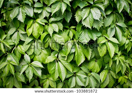 Green wall, green texture or background - stock photo
