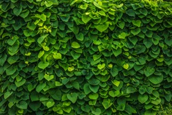 green wall nature plants background