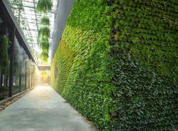 Green wall vertical garden friendly green nature eco friendly design landscape in building