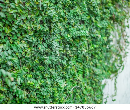 Green Wall wall background