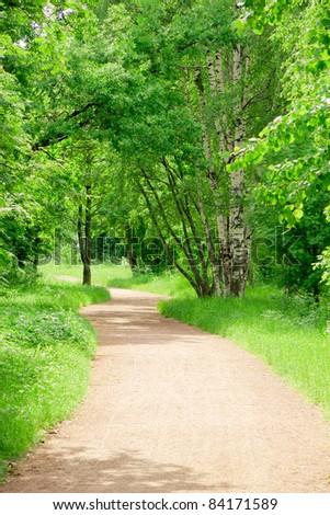 Green Wallpaper Summer Leaves Woods Landscape