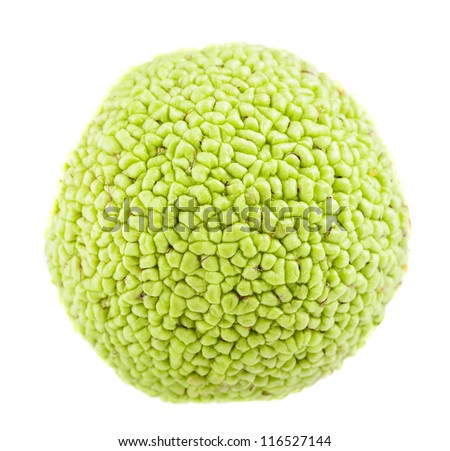 Green walnuts isolated on a white background - stock photo