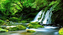 Green-Waterfall-River-rocks-covered-with-green-moss-Forest-Waterfall. deep forest at center of the forest with a waterfall. quiet and pleasant environment for tourism. very deep forest area