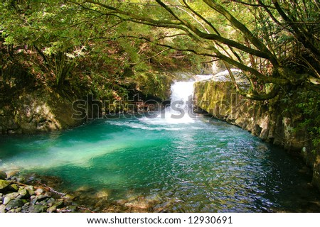 Green waterhole in the forest