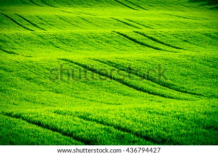 Green wavy hills in South Moravia, Csezh Republic #436794427