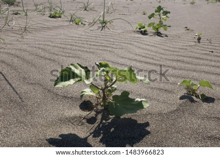 Green weed plant growing in the sand, perseverance concept
