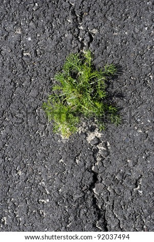 Green weeds break through cracks in black asphalt