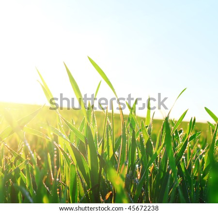 Green wet grass under sunset light