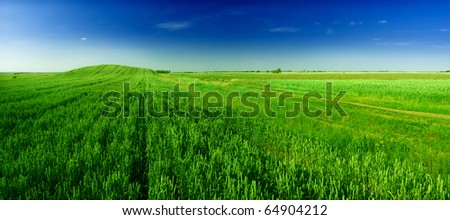 green wheat field and  sky