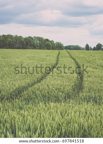 green wheat field close up macro photograph with tire tracks - vintage film look #697841518