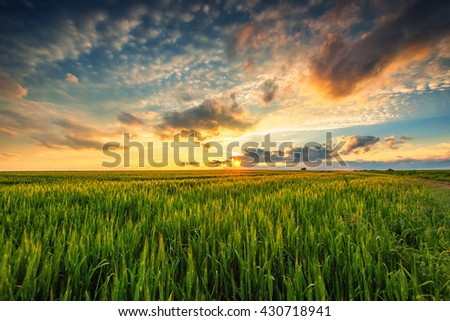Green wheat field , sunset shot #430718941