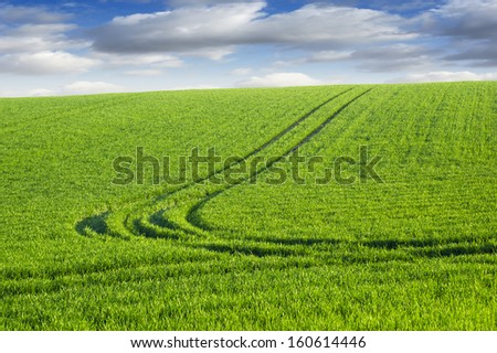 Green wheat field with blue sky  - stock photo