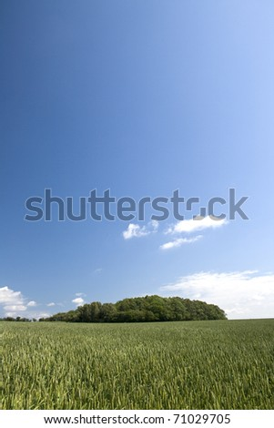 Green wheat field with blue sky #71029705