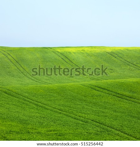 green wheat field with lines under blue sky #515256442