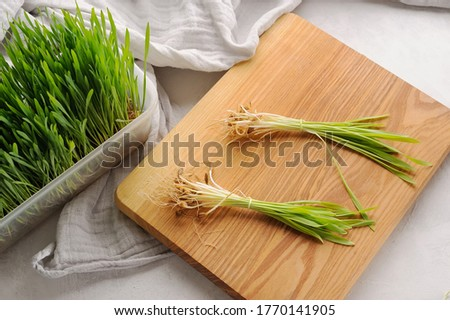 Green wheat grass plant on thecutting board and in the pot.Sprouted wheat. Healthy, detox ingredient. Stock photo ©