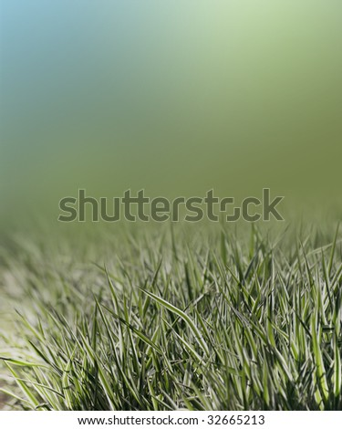 Green-white grass against color background