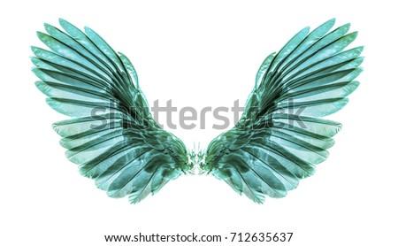 green wing on black blackground Foto stock ©