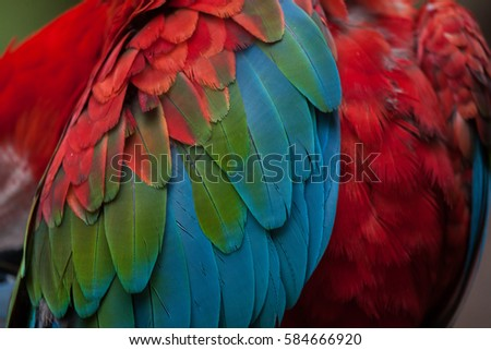 Shutterstock Green-winged macaw (Ara chloropterus), also known as the red-and-green macaw. Plumage texture.