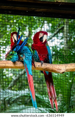 Shutterstock Green Winged Macaws at Parque das Aves - Foz do Iguacu, Parana, Brazil