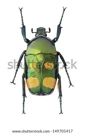 Green with Yellow Spots Metalic Beetle #149705417