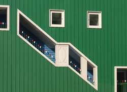 Green wooden wall with openings decorated with multicolored artificial tulips. Space for text.  Zaandam, Netherlands.