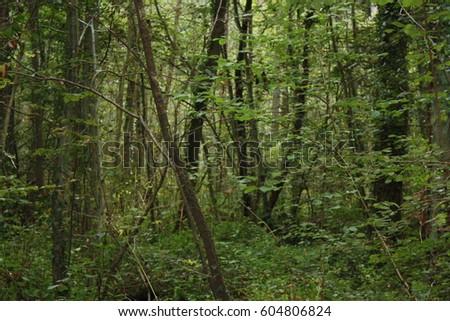 green woods #604806824