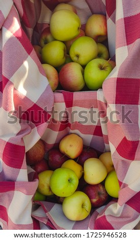 Green, yellow and red delicious apples on the white and red background