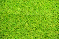 Green-yellow forest floor, decorative moss, pattern, background, texture