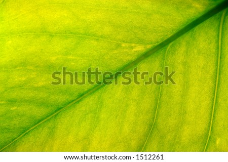 green/yellow leaf closeup