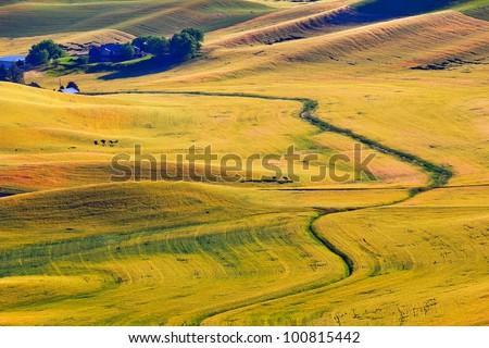 Green Yellow Wheat Grass Fields Farm Road Palouse Washington State Pacific Northwest