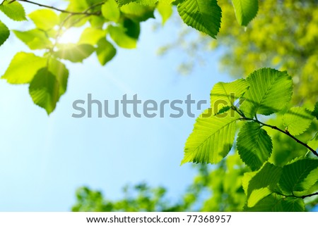 green young leaves and sun on blue sky