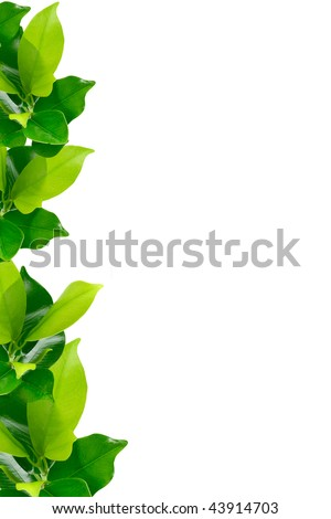 Green young plant border on white background