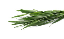 Green young wheat isolated on white background