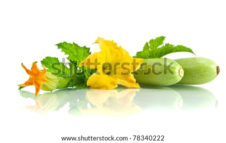 Green zucchini leaves and flower isolated on white