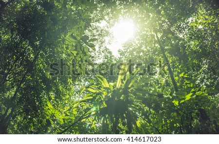 Greenery canopy view of tropical rainforest over sunlight
