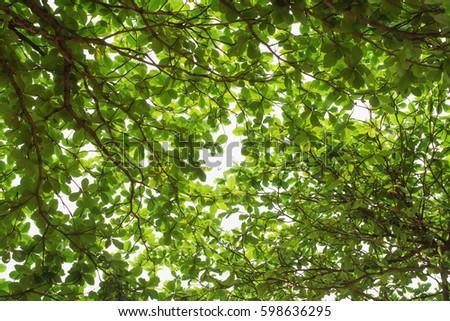 Greenery leaf background texture #598636295