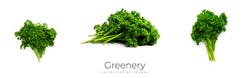 Greenery. Sprigs of curled parsley on a white background. Macro photo. High quality photo