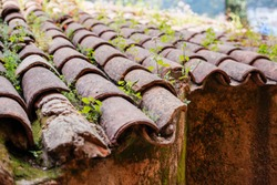 greenery sprouted on the tiled roof. old tiled roof, picturesque view of the old roof