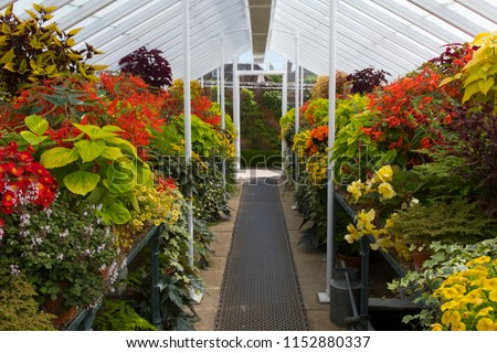 Greenhouse annuals plants #1152880337