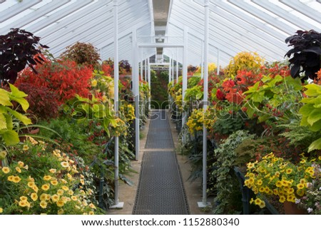 Greenhouse annuals plants #1152880340
