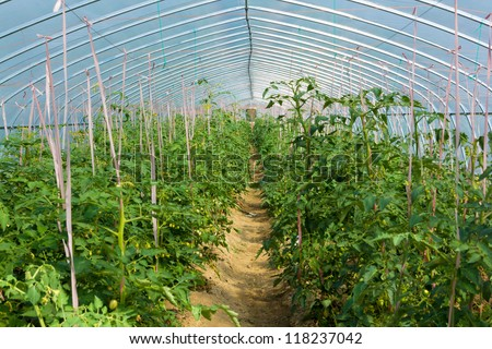 Greenhouse cultivation of vegetables