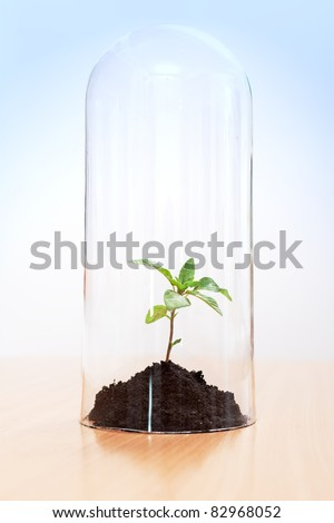 Greenhouse effect on a plant enclosed inside a glass tube. Global warming concept